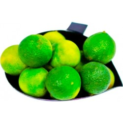 Fresh green calamansi